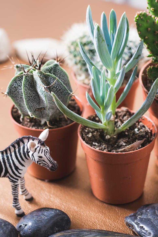 Deko Mit Pflanzen Sukkulenten Mini Garten Mit Wildem Tier Wendys